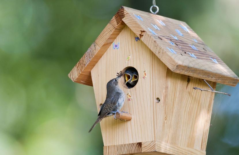 Скворечники – удобные домики для птиц-родителей