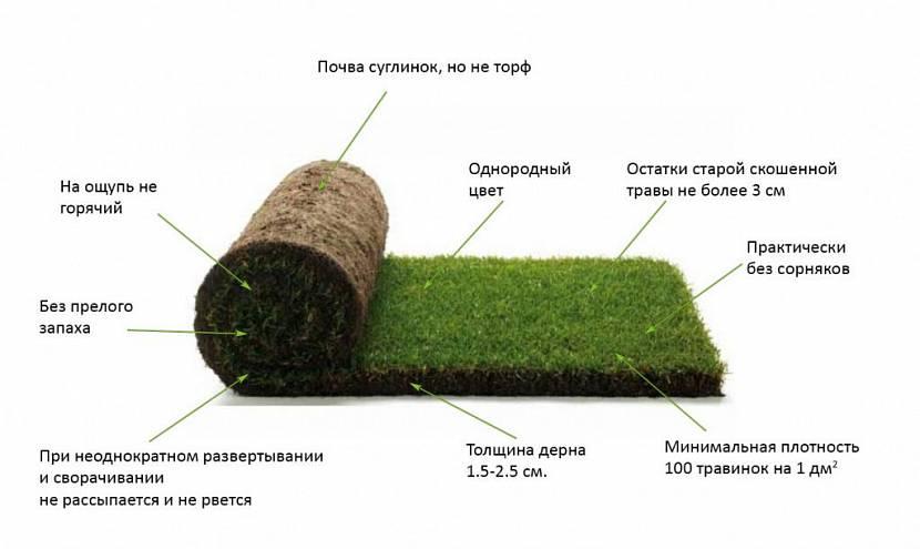 толщина газона в рулонах